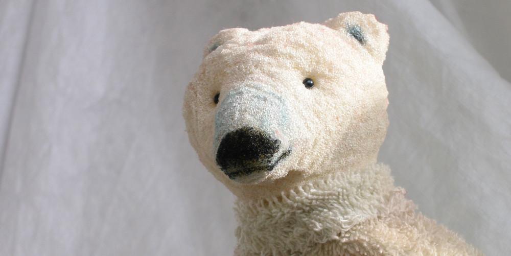 Auch Eisbären können frieren: Kopf von Ika